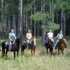 Horse Drawn Sleigh Rides & Carriages Rides
