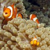 IOAdventures Sumatra Banda Aceh, Indonesia Scuba & Snorkeling