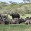 Kenya Home of Adventure