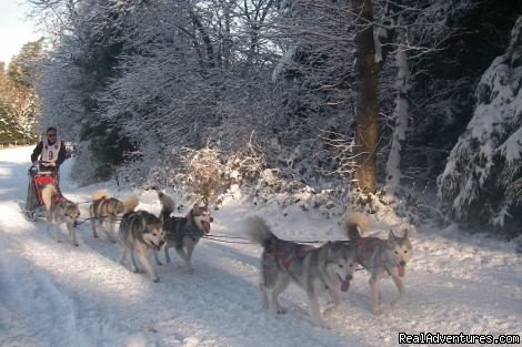 Gasthof zur Linde - Annual Sled Dog Race | Image #6/8 | Gasthof zur Linde ...your cosy Guesthouse in Dobel