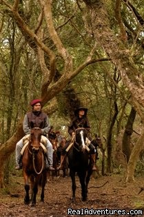 Horse riding  - Unique Argentine Estancia