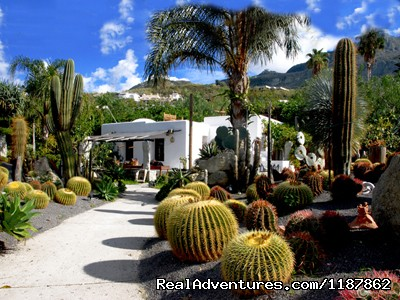Part of the botanical garden with the Cactus lounge cafe  - Apartments in a Botanical Garden, Ischia (Amalfi)