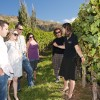 Wine Guide In The Vines