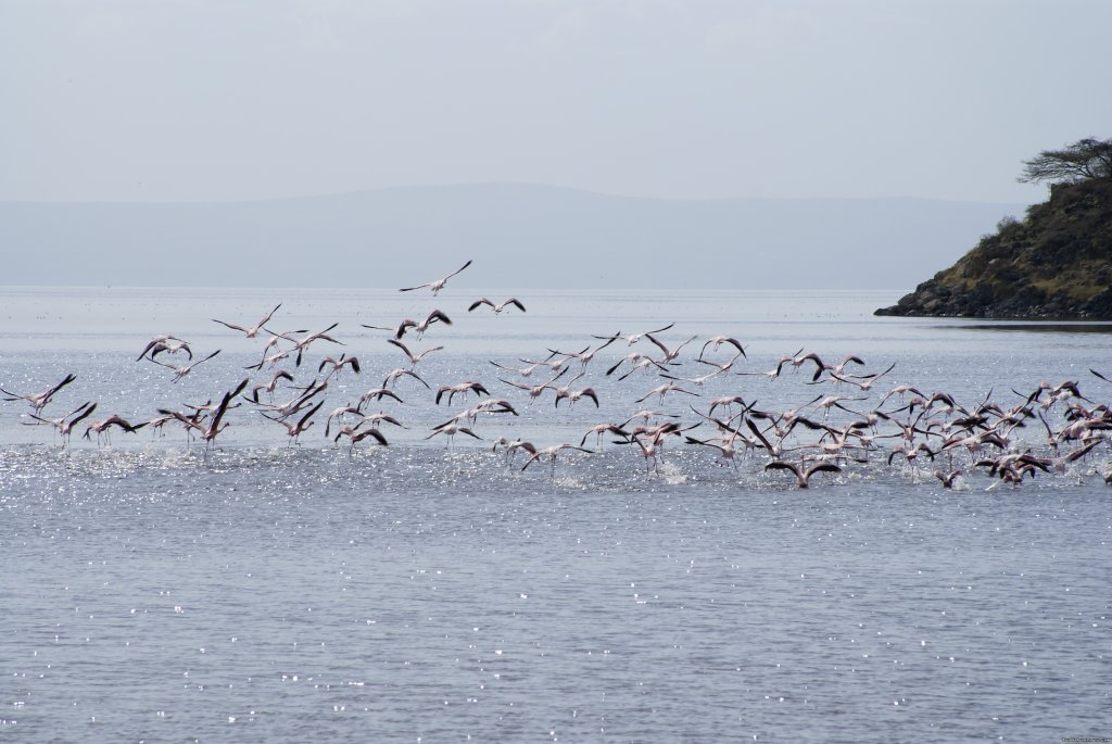 Flamingo on lake shalla | Image #4/17 | Tours in Ethiopia ..The right way