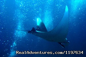 Manta Ray diving in Krabi, Thailand - Scuba Diving In Krabi Thailand