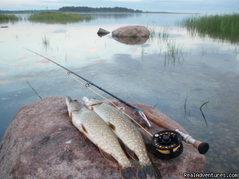 Fishing adventures in Estonia: Pikes from Estonia