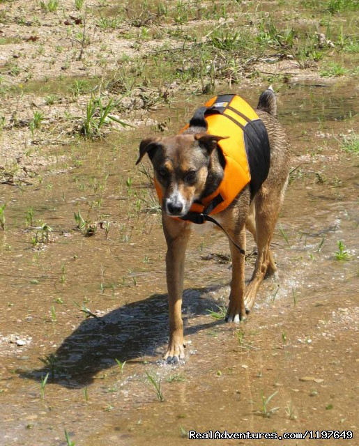Life is Ruff (#9 of 21) - Kayaking and Canoeing Rentals & Tours