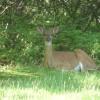 enjoy our back yard