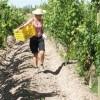 Lodging in a vineyard at Posada Cavieres B & B