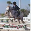 Horseback Riding Lessons and Camps