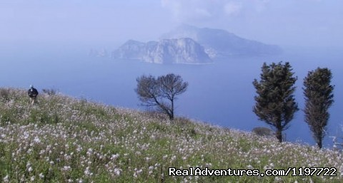 capri  - Sun ,sea,trekking , Kayak ,culture & The Best Food