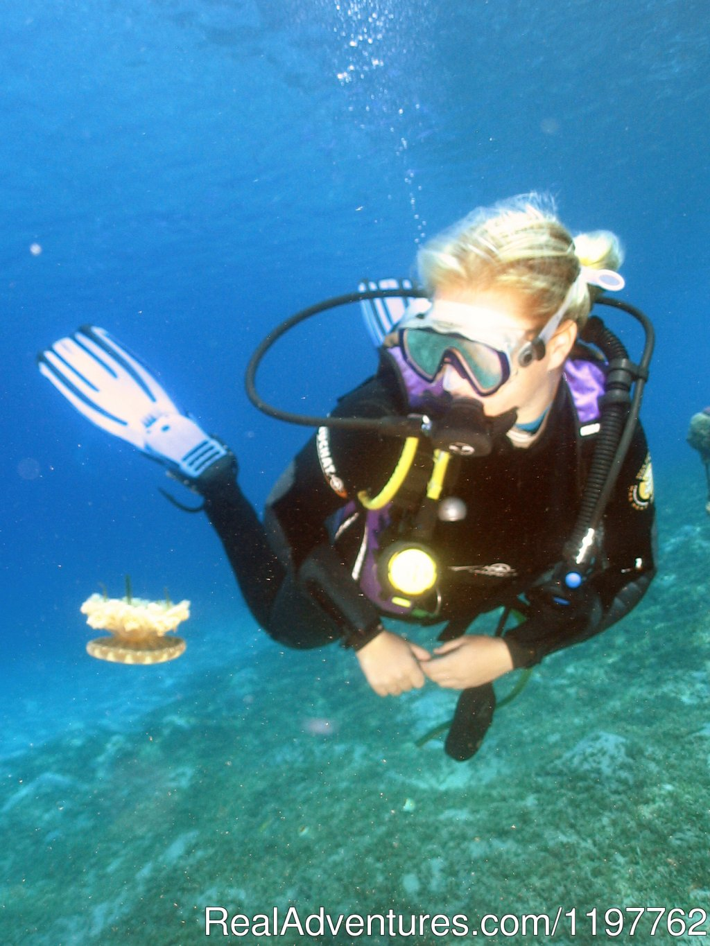Diver and Jelly fish | Image #13/22 | Red Sea Diving - With out the crowds