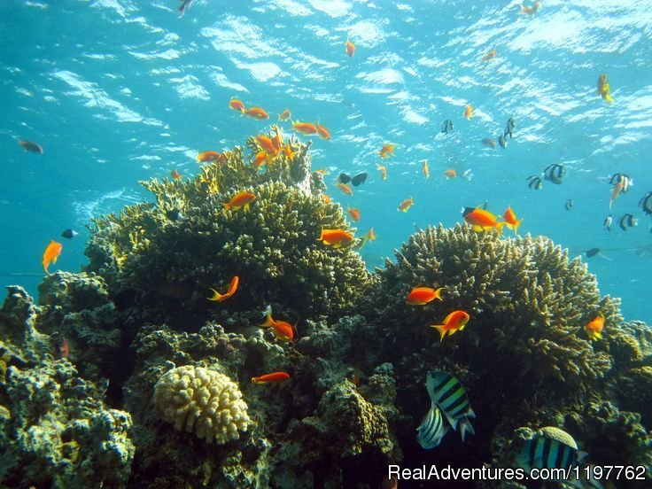 Coral reef | Image #18/22 | Red Sea Diving - With out the crowds