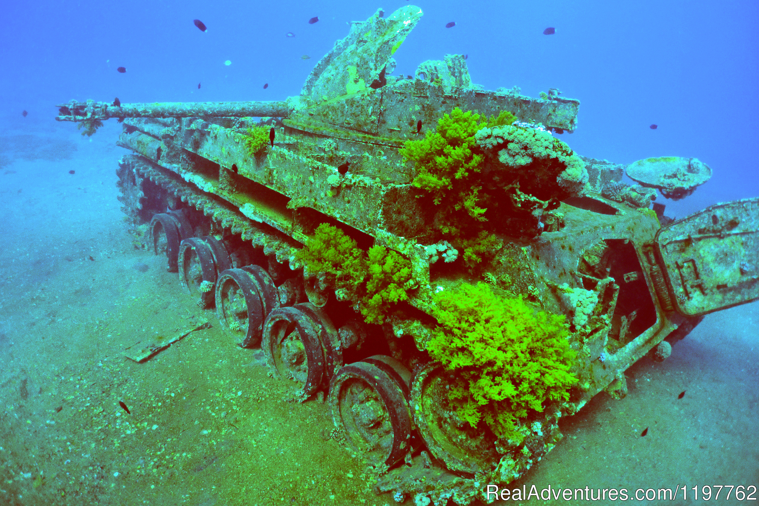 The Tank | Image #9/23 | Red Sea Diving - With out the crowds
