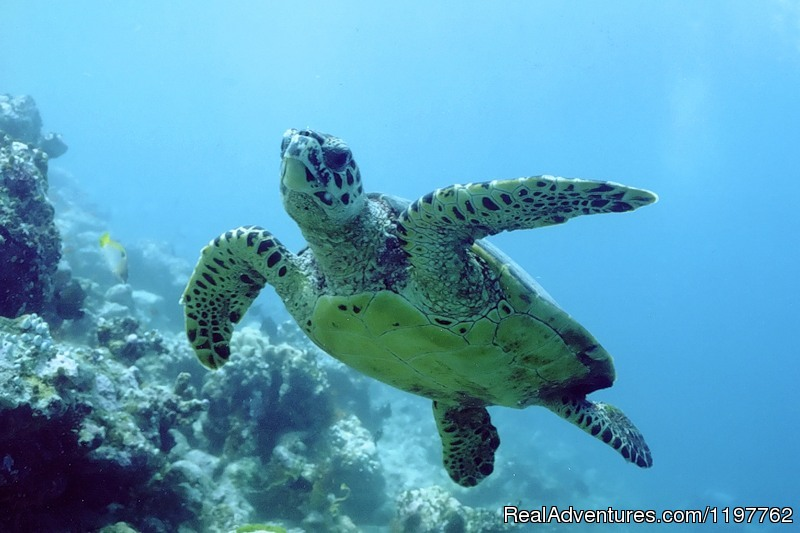 Turtle | Image #16/23 | Red Sea Diving - With out the crowds