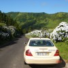 Road of Hidrangeas