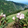 Nordeste view