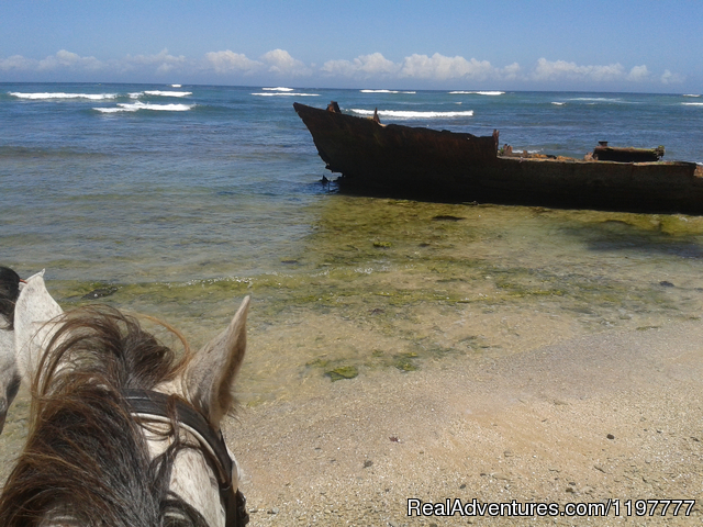 Image #3 of 4 - Mkulu Kei Horse Trails and Riding Holidays
