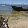 Mkulu Kei Horse Trails and Riding Holidays