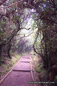 Costa Rica Rainforest Trail - The Wonders of Costa Rica - Fully Customizable