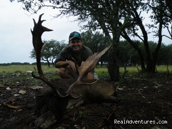 Chocolate Fallow Deer Hunts - Hunting Packages in Texas Hill Country