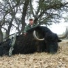 World Record Yak