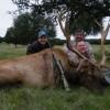 372 B&C Rocky Mountain Elk Hunt