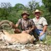 Nubian Ibex Hunt
