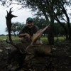 Chocolate Fallow Deer Hunts