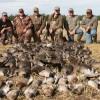 Alberta Waterfowl
