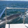 Whale, Dolphin and Seal watching tours