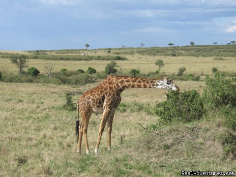 Dining Out - Safaris, Tours & Beach Holidays in East Africa