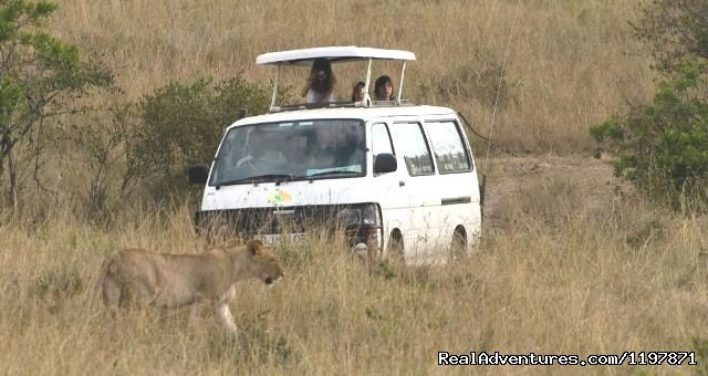 Game Drive | Image #6/9 | 14 Nights Safari in Kenya and Tanzania