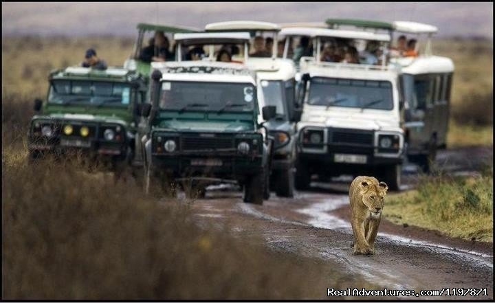 Image #8/9 | 14 Nights Safari in Kenya and Tanzania
