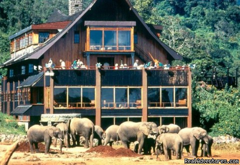 14 Nights Safari in Kenya and Tanzania The Ark Hotel in Aberdare National Park