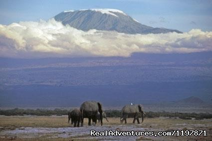- 14 Nights Safari in Kenya and Tanzania