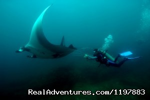 Manta Ray In Costa Rica (#7 of 26) - Scuba Diving In Costa Rica With Bill Beard
