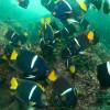 Scuba Diving In Costa Rica With Bill Beard