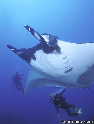 Giant Pacific Manta Ray (Manta birostris) (#1 of 15) - History Of Scuba Diving & Adventure In Costa Rica