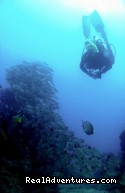 Diving on the wall - History Of Scuba Diving & Adventure In Costa Rica