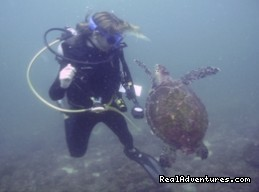Friendly turtle in Costa Rica (#13 of 15) - History Of Scuba Diving & Adventure In Costa Rica