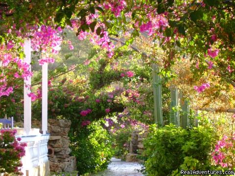 ANGELIKA LEROS www.leros-angelika.com (#1 of 6) - Angelika Leros Hotel
