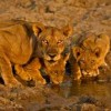 Kenya, Tanzania, Masai Mara Budget Safari Camping Central Highlands, Kenya Hiking & Trekking