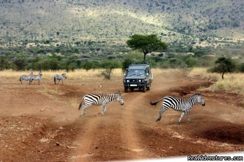 Game Drive In Ngorongoro Crater | Image #10/20 | Uhuru Travel & Tours Ltd