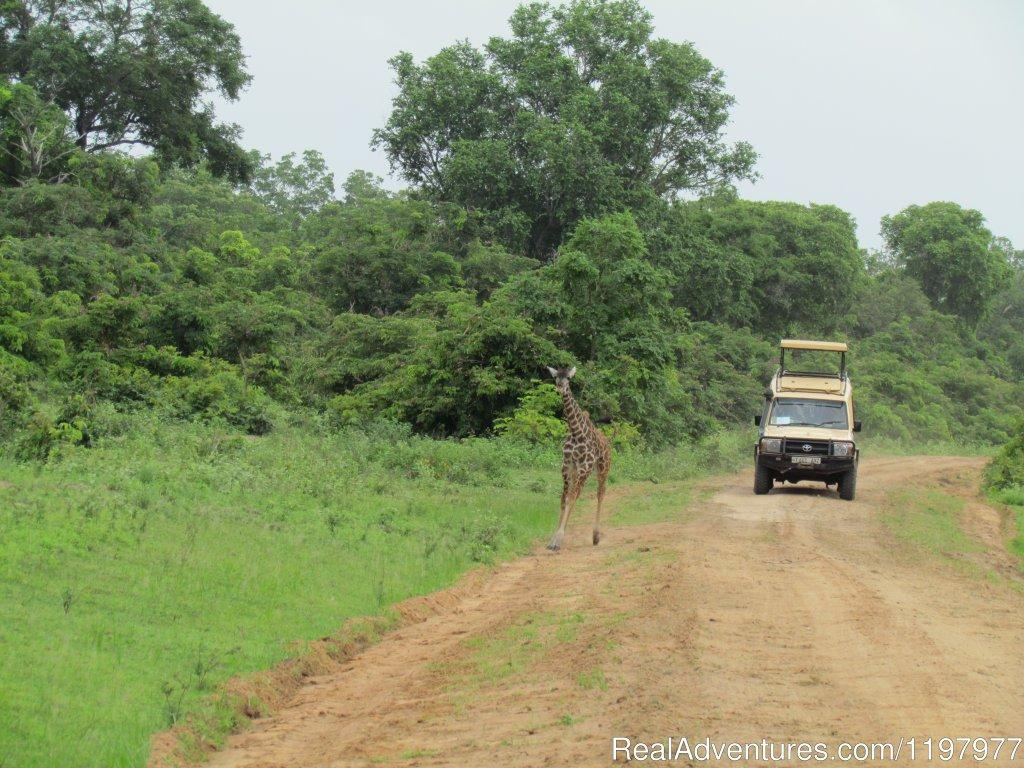 Selous Gr | Image #17/20 | Uhuru Travel & Tours Ltd