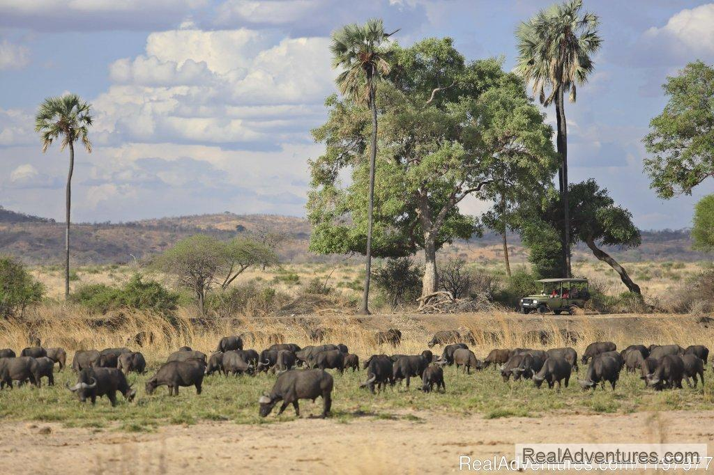 Game Drive In Ruaha Np | Image #6/20 | Uhuru Travel & Tours Ltd
