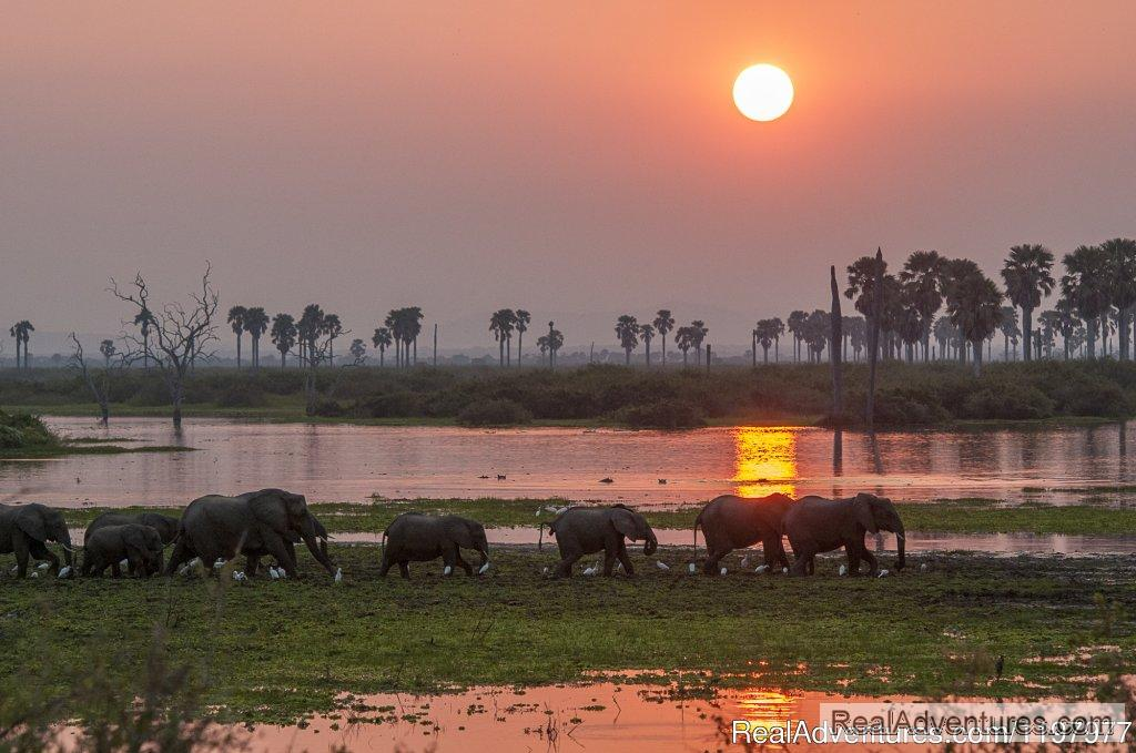 Sunset In Selous Gr | Image #4/20 | Uhuru Travel & Tours Ltd