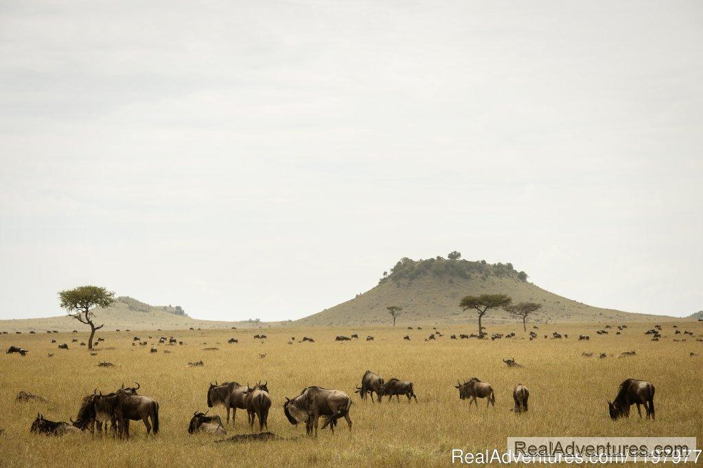 Wildebeests In Serengeti Np | Image #3/20 | Uhuru Travel & Tours Ltd