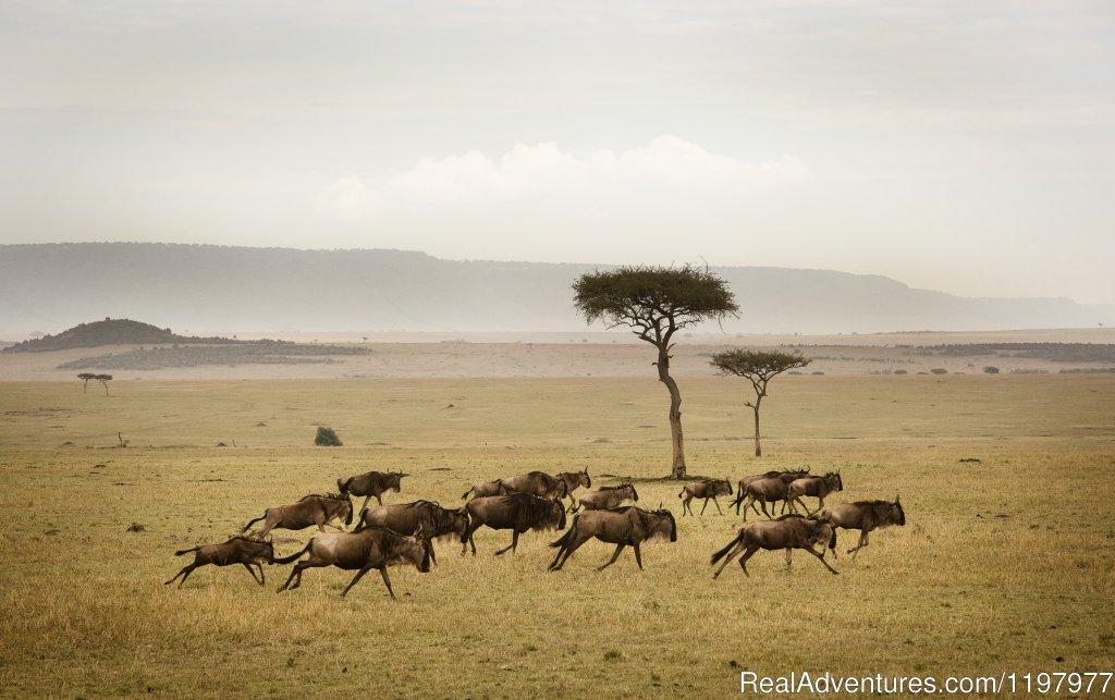Serengeti Np | Image #13/20 | Uhuru Travel & Tours Ltd