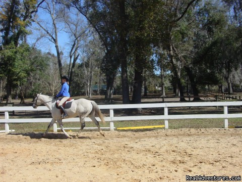 Beautiful Trail Rides Minutes from Downtown Ocala Ocala, Florida Horseback Riding